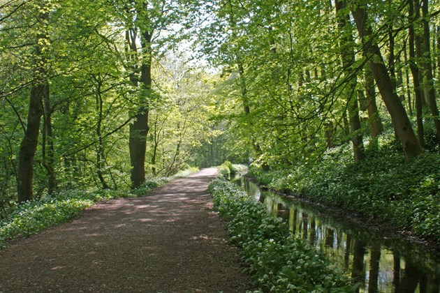 Skipton Castle Woods
